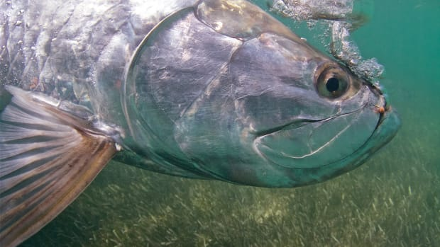 Andy Mill went from chasing gold to chasing silver … tarpon that is.