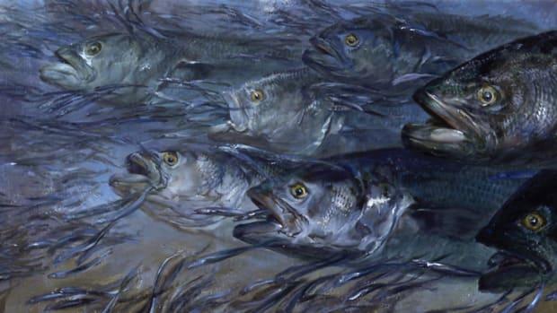 Painter Stanley Meltzoff captures a bluefish feeding frenzy.