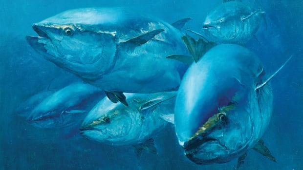 prm-bluefin28