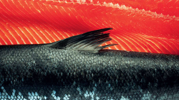 prm-salmon-opener