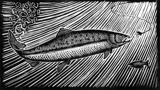 prm-Salmon-Rising