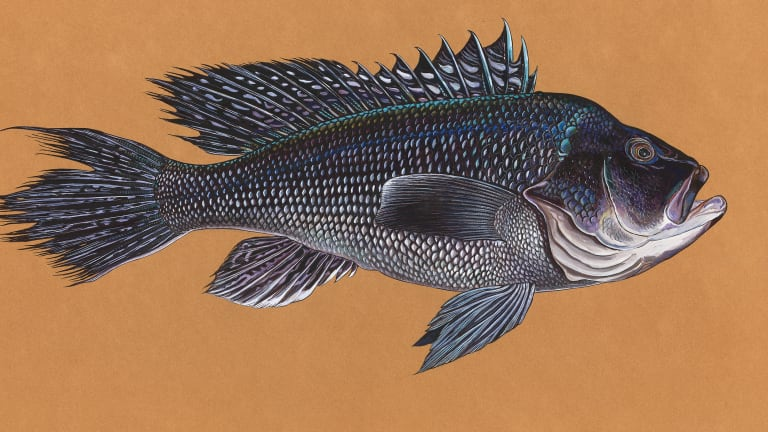 Black Sea Bass: Feeding the Stomach and Soul