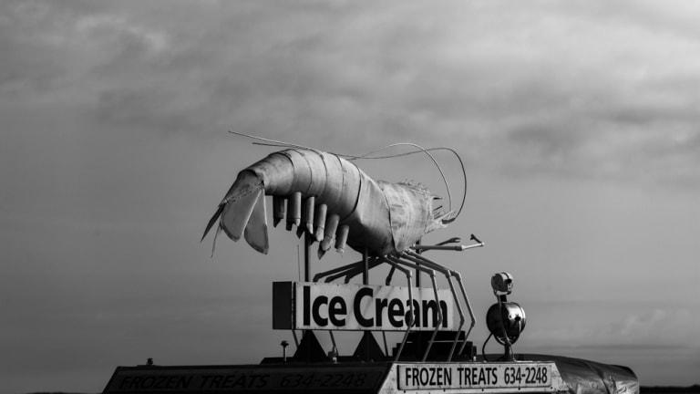 Big Shrimp Will Rise Again