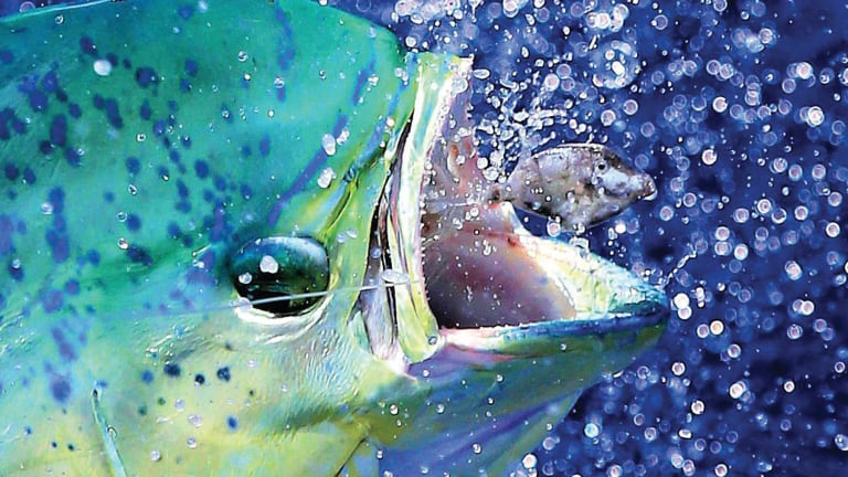How I Got That Shot: Mahi-Mahi