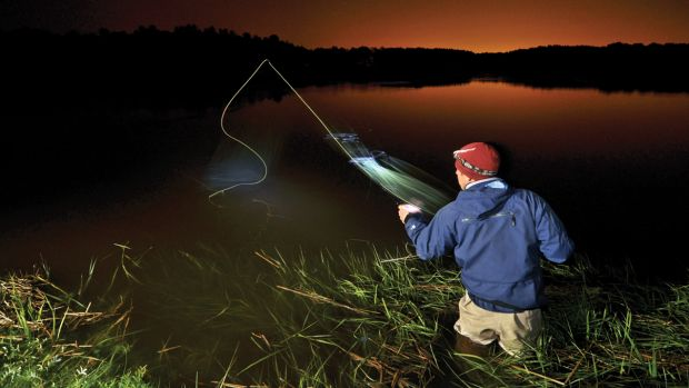 Cinder worm hatches mostly take place after dark, attracting night-owl anglers and stripers.