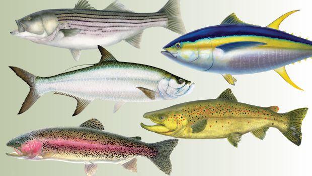 5 Reasons We Fish