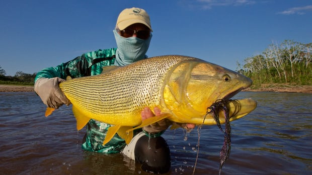 prm-golden-fish