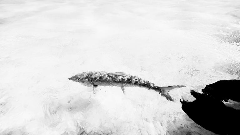 Bonefish: Speed, Power and Grace
