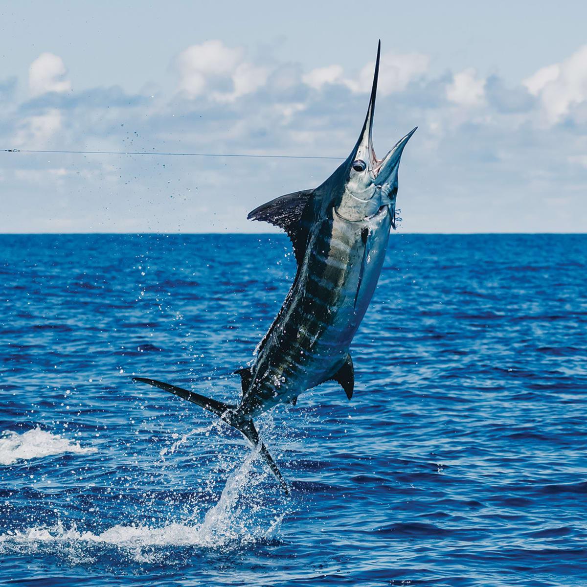 Big Fun' - Anglers Journal - A Fishing Life