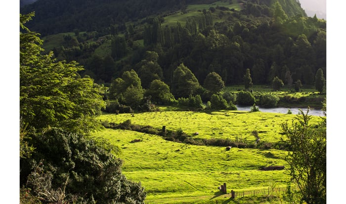 Green is the color of Chilean Patagonia during summer months. Annual rainfall can exceed 100 inches. Pictured is a pasture along the Simpson River.