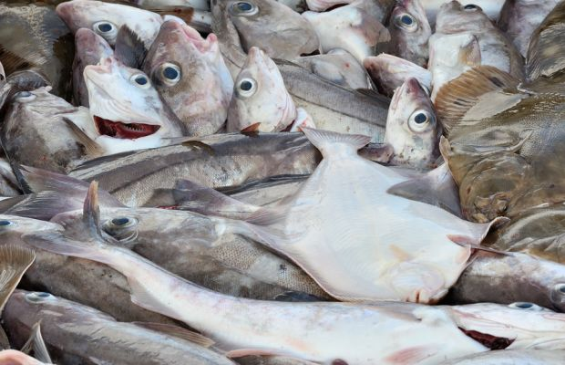 Federal indictment rocks New England fishing industry