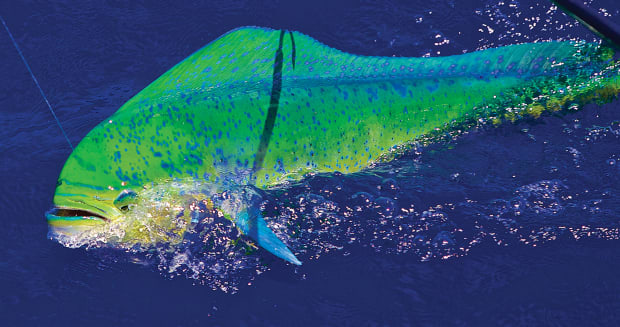 Ultimate Mahi - Anglers Journal - A Fishing Life
