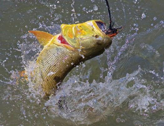 small fish jump