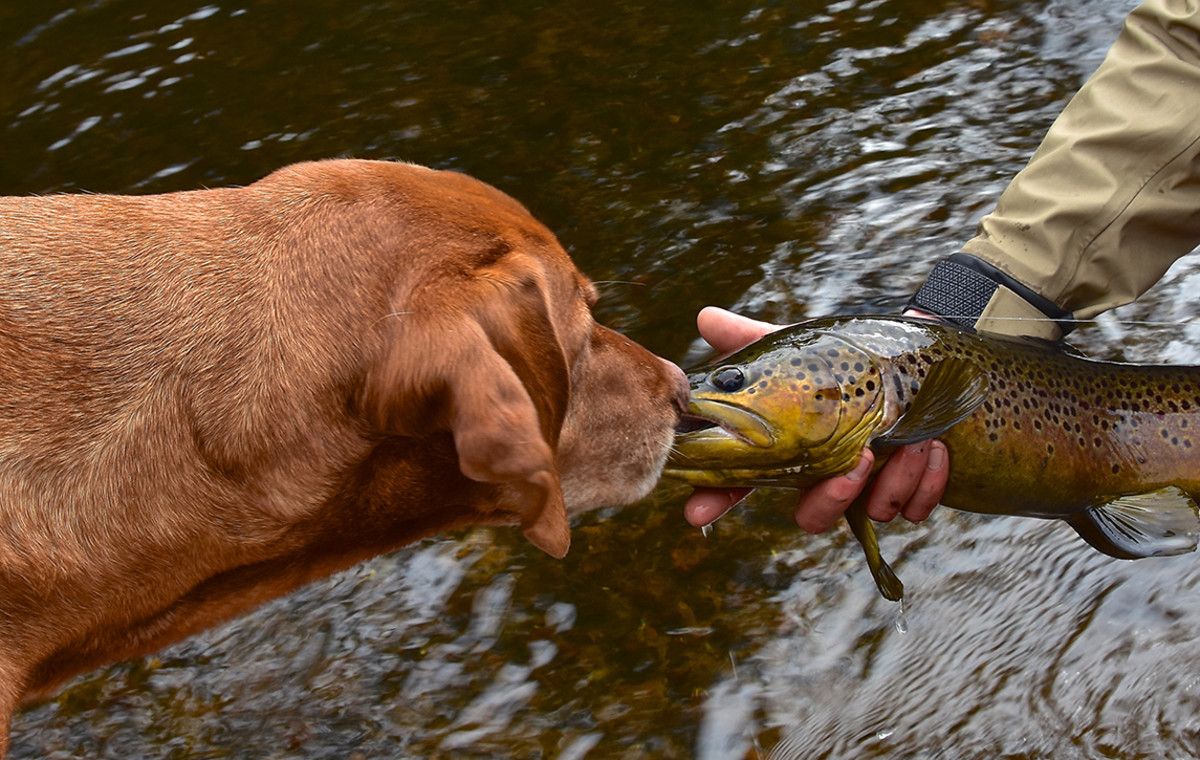 Scout with fish - The Kiss