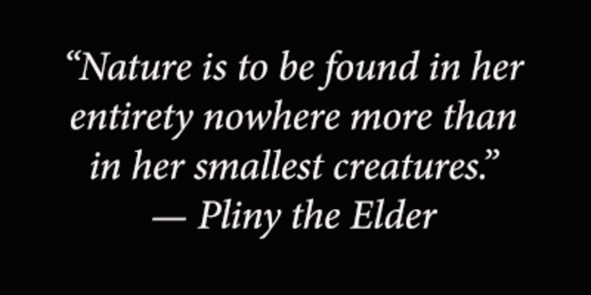 """Nature isto be found in her entirety nowhere more than in her smallest creatures."" — Pliny the Elder"
