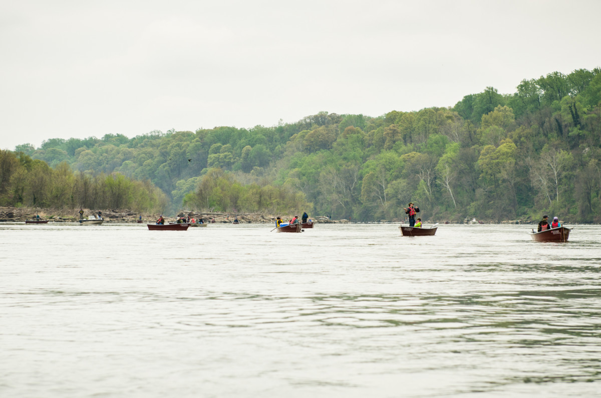 The shad fleet from Fletcher's Boathouse on the Potomac.