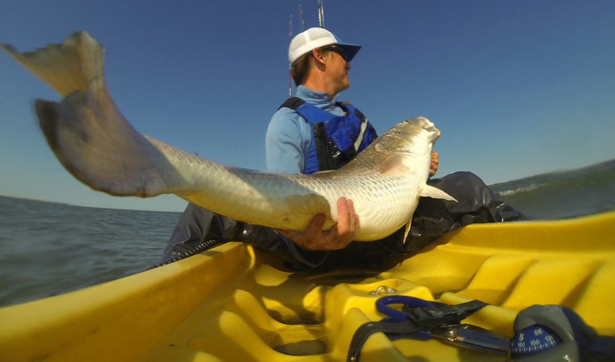 Kayak anglers benefited greatly from the resurgence of the red drum fishery in the Mid-Atlantic.
