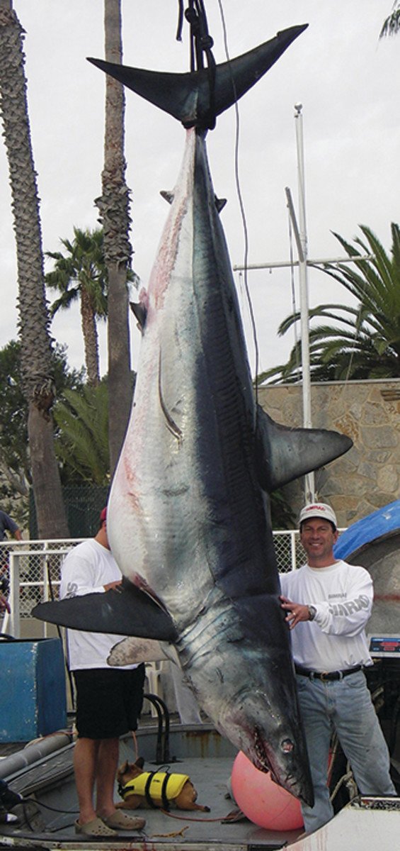 1,175-pound Mako shark
