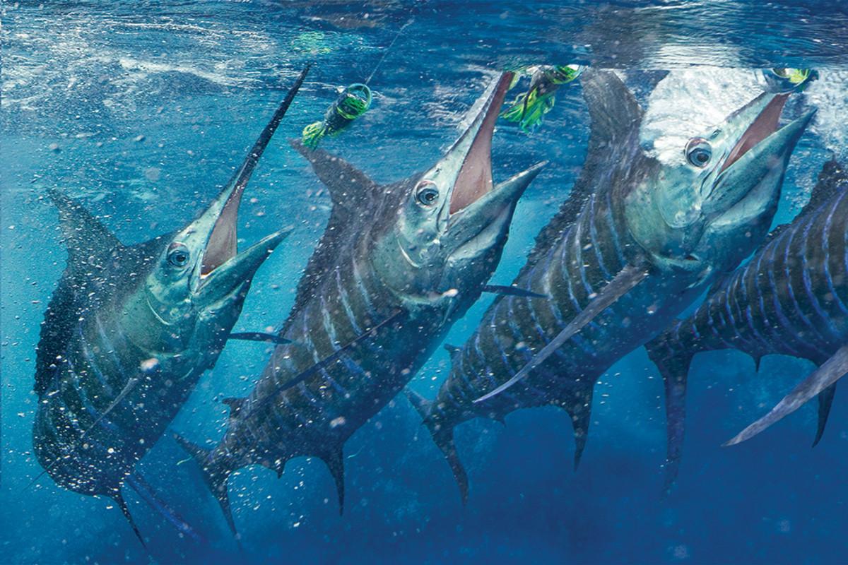 How I Got That Shot Anglers Journal A Fishing Life