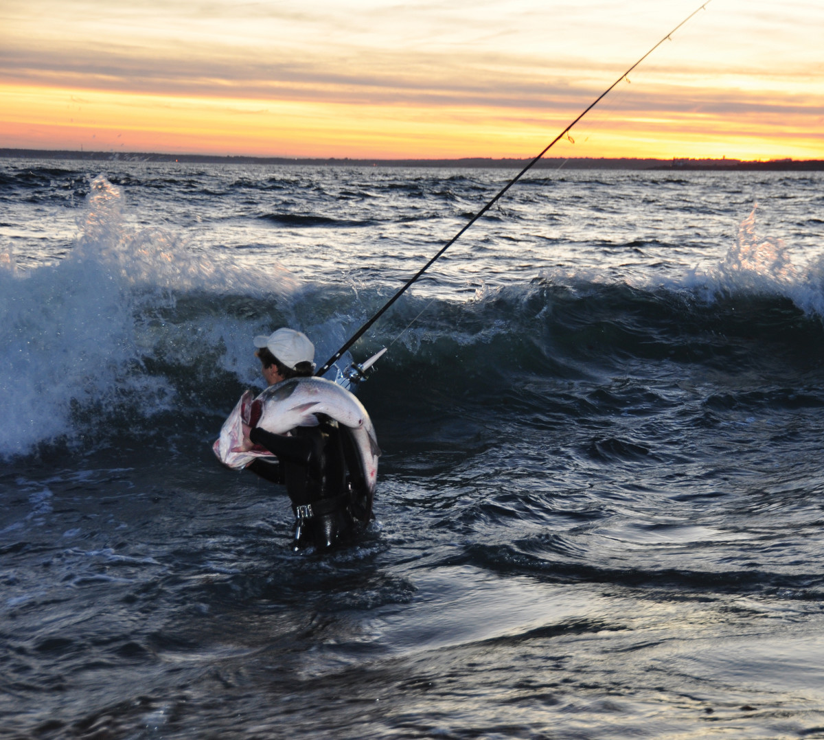 Waves of stripers push up the coast, including some trophies.
