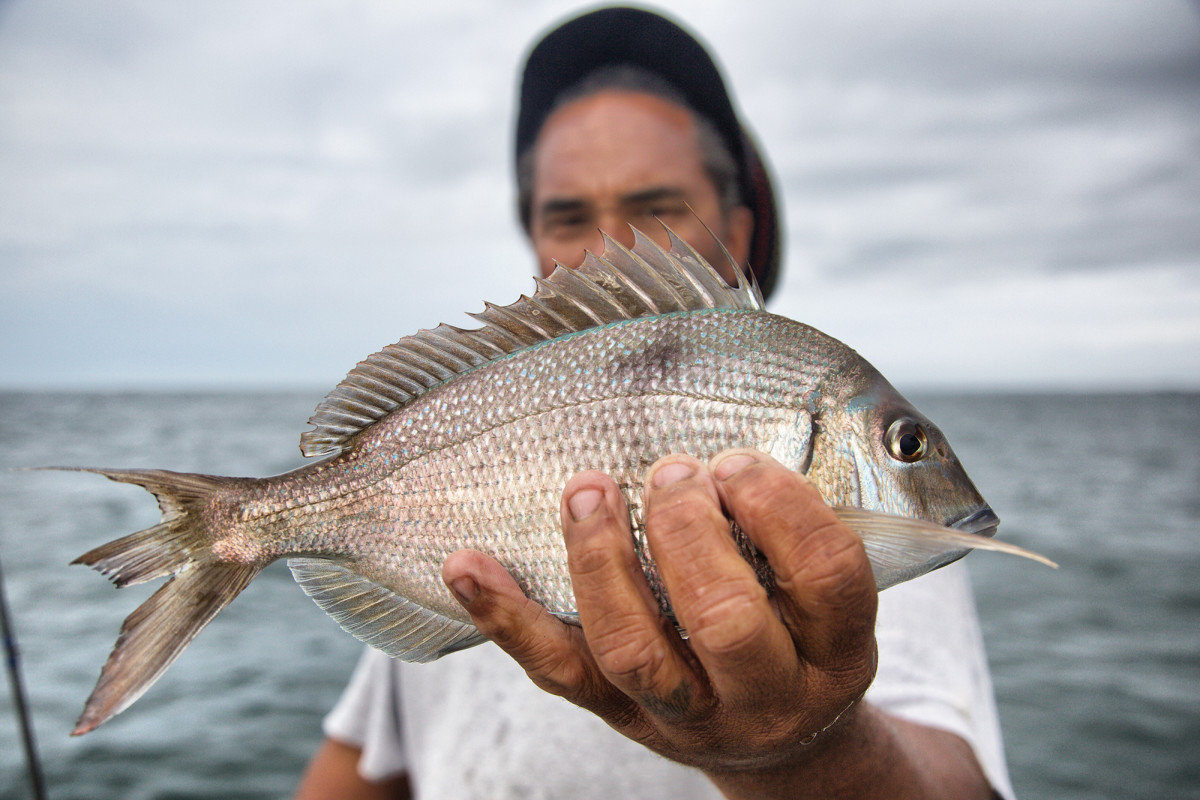Those who target scup, or porgies, regularly tend to love 'em quietly.