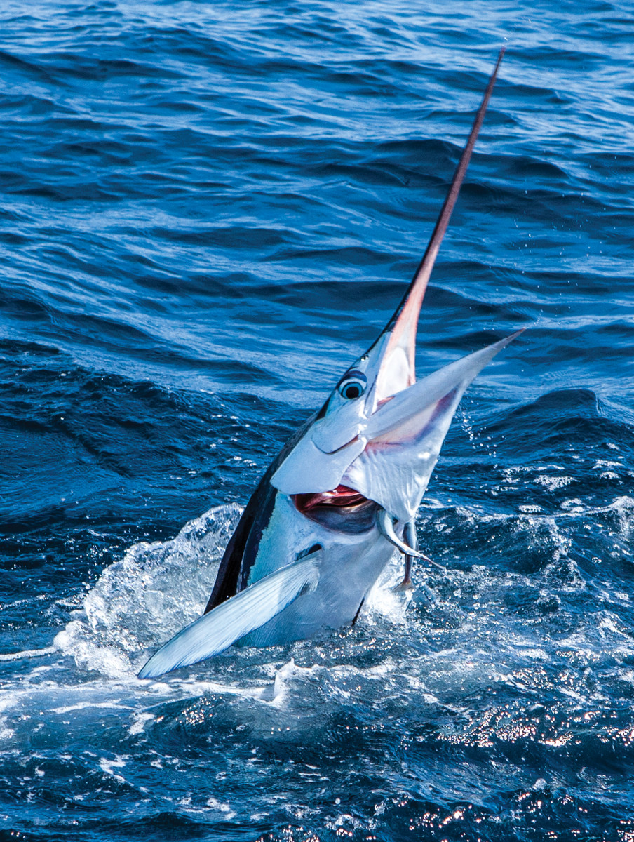 """Watching an alpha predator attack its prey is like watching Wild Kingdom 20 feet off the back of the boat."" Note the remora inside the marlin's throat patch."