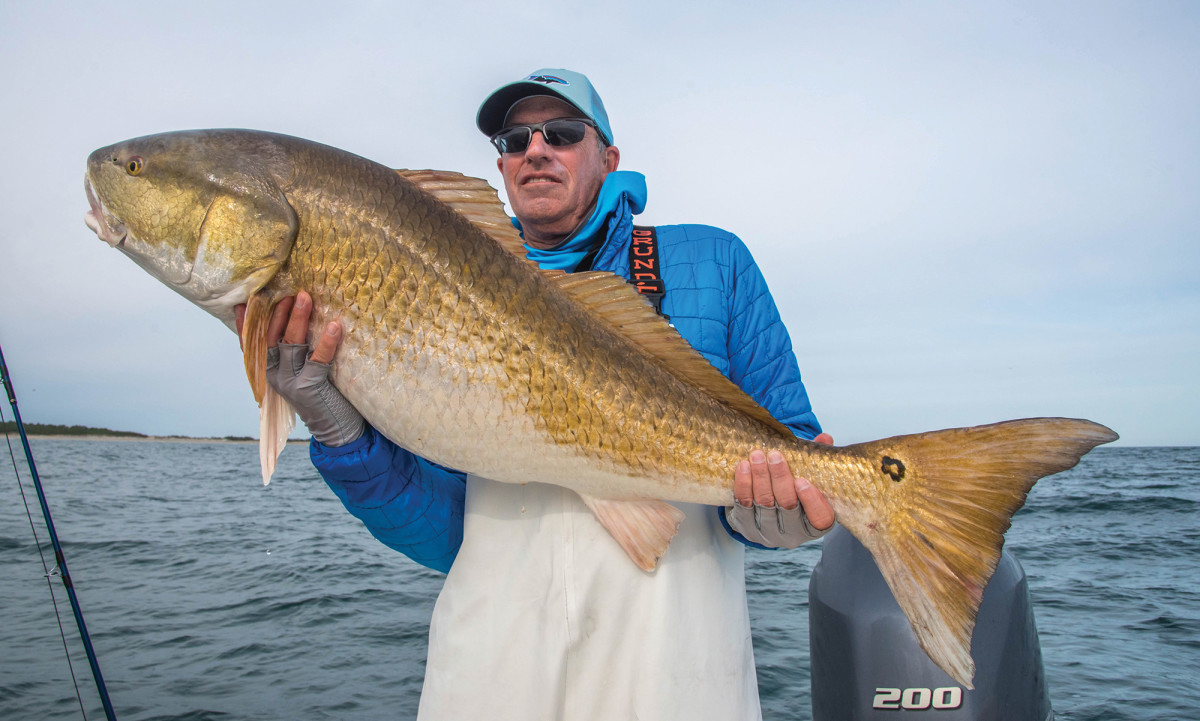 A trophy red drum on the fly.