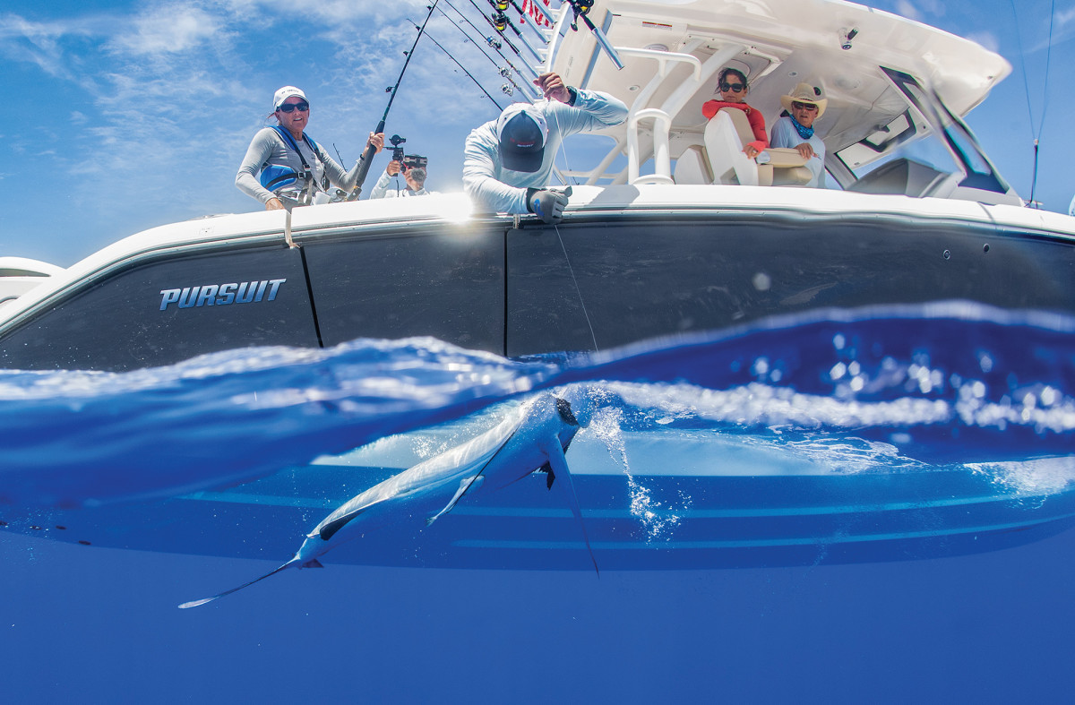 The crew on a Pursuit S 368 brings a white marlin alongside.