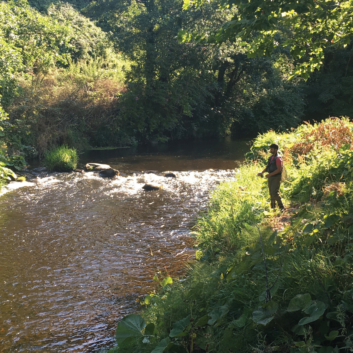 Only members of the Dodder Anglers' Club can fish the river.