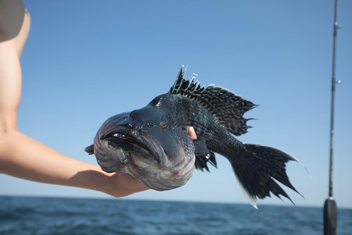 06-black-sea-bass