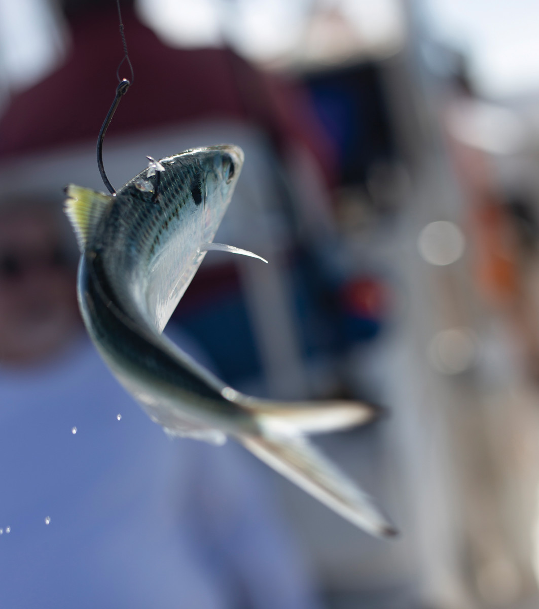 Live bait is one key to success.