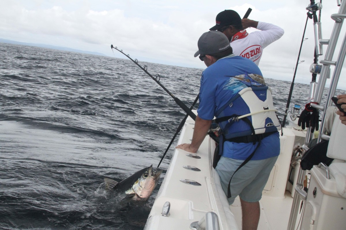 Yellowfin can make mincemeat out of your shoulders and lower back.