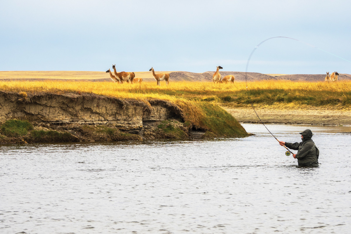 An angler Spey-casts for brown trout at Estancia Maria Behety in Tierra del Fuego, Argentina, while a herd of disinterested guanacos continues to graze.