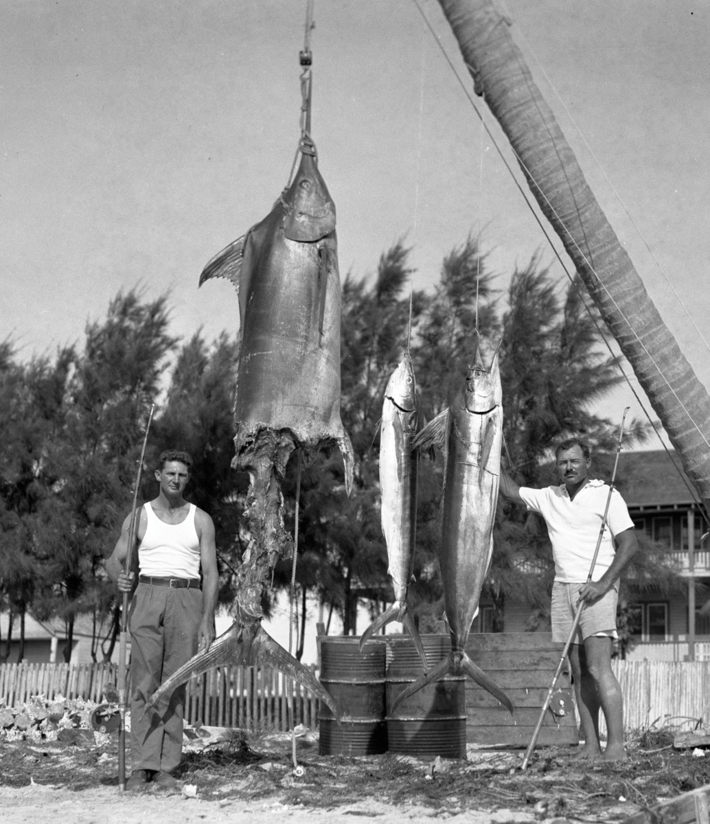 "Would Mike Strater's marlin have been a world record had it not been ""apple-cored"" by sharks? Possibly."