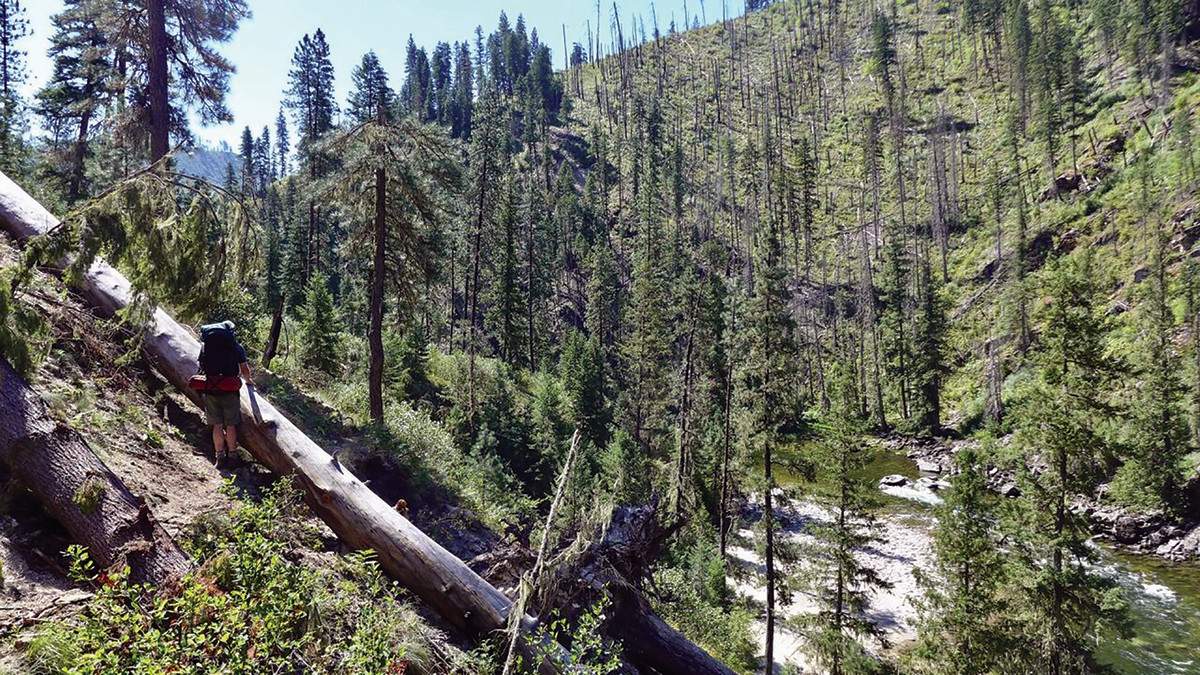 The promise of good fishing kept the hikers from fixating on the bugs and downed trees during their 10-day odyssey in Idaho's Selway-Bitterroot Wilderness.