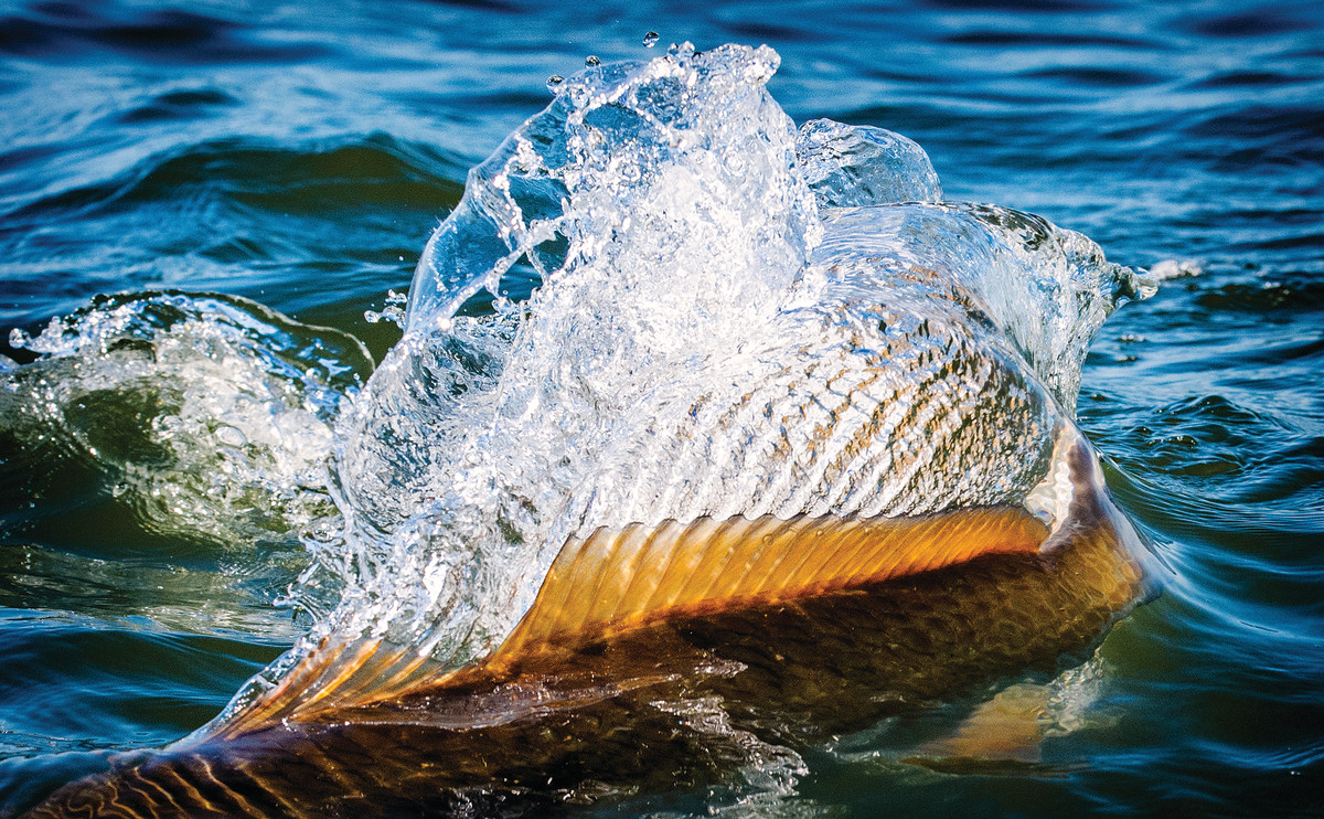 Anglers from around the world visit the Louisiana marshes in search of trophy redfish. The author caught the biggest red of his life in Breton Sound.