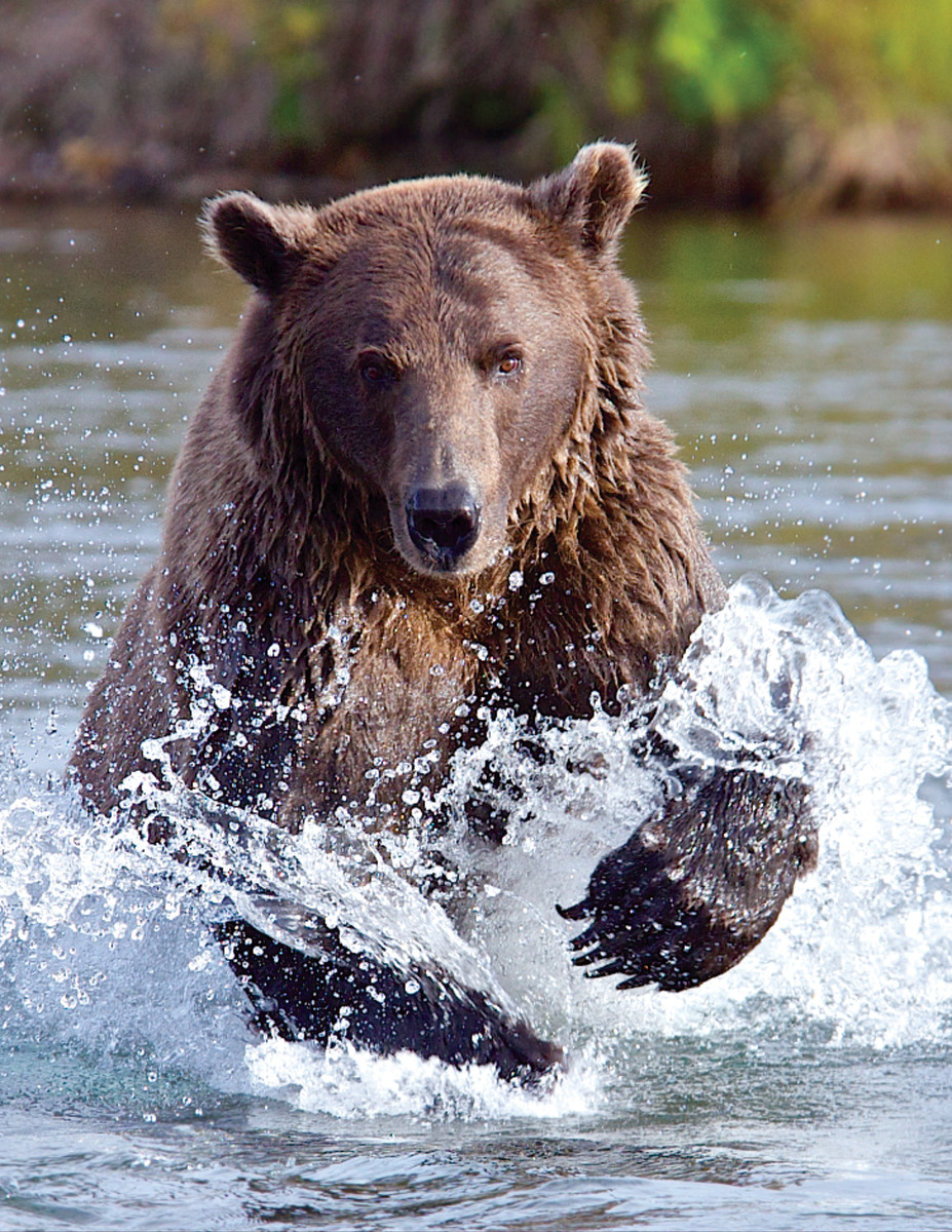 Experienced anglers know better than to be complacent with bears.