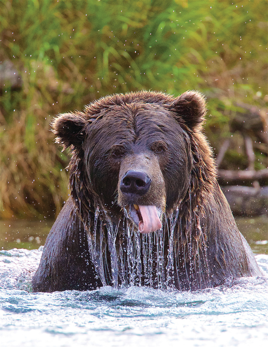 Many bears have distinct personalities.