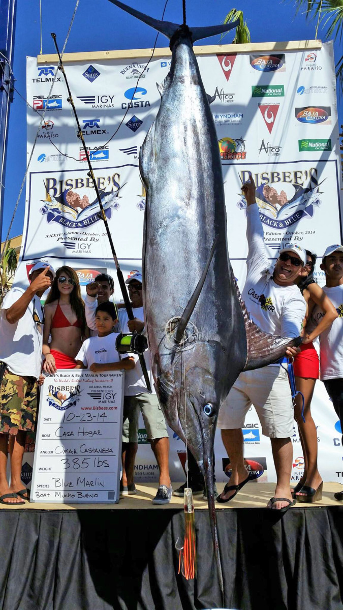 The 385-pound blue marlin that won the tournament, netting the team a $258,325 payout.