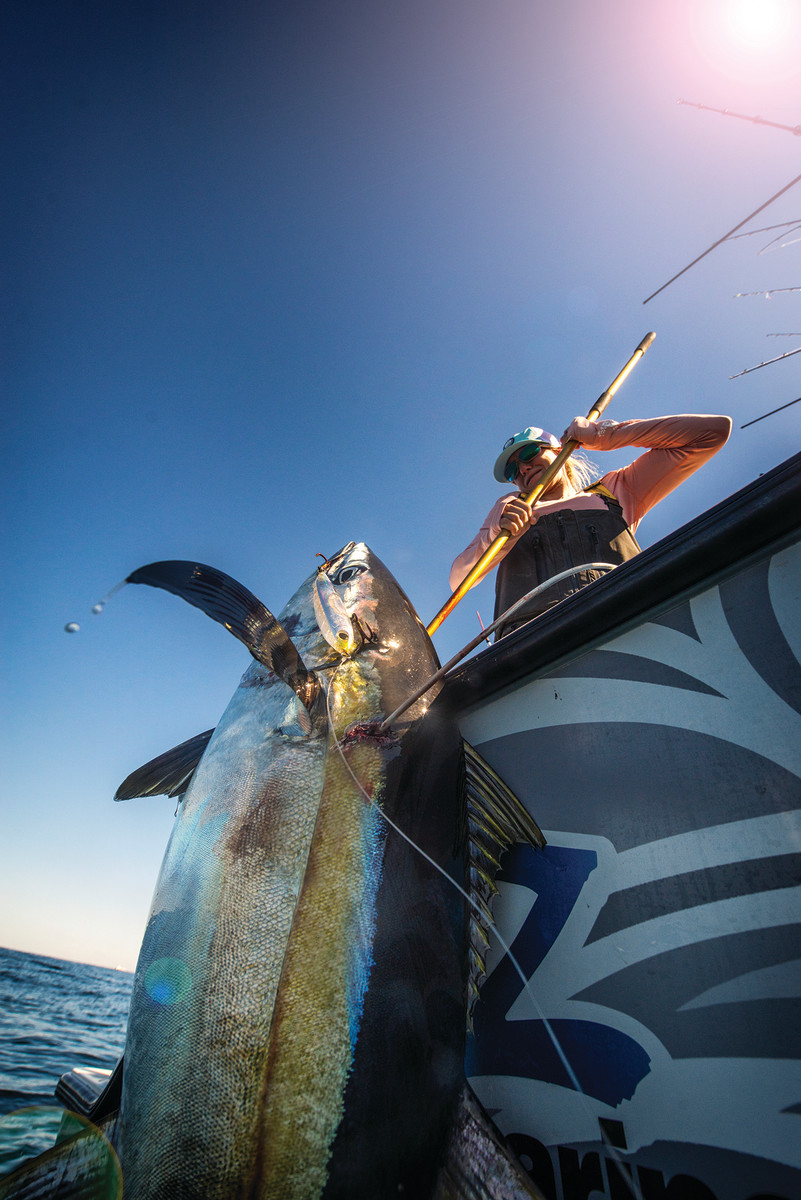 A chunky Gulf of Mexico yellowfin comes aboard.