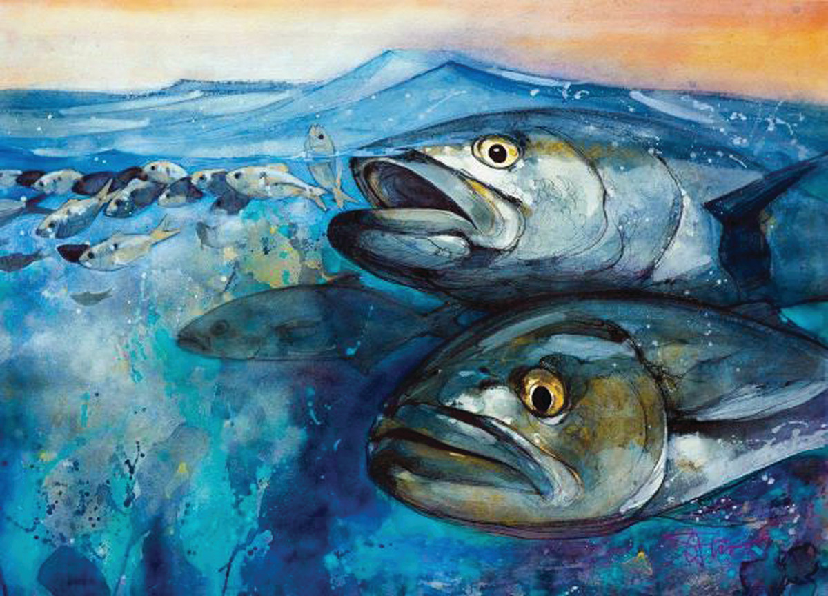 """Nowhere to hide in""""Bluefish Chasing Bait."""""""